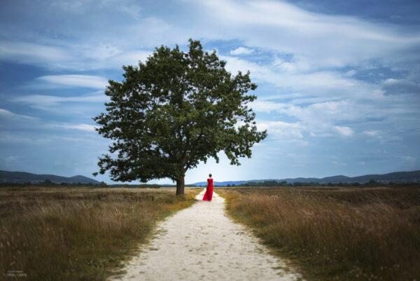 Baum Motiv